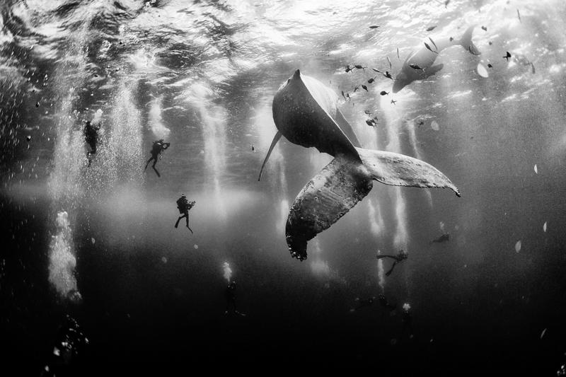 """""""Whale Whisperer"""" ®Anuar Patjane Floriuk"""